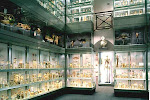 The Hunterian Museum