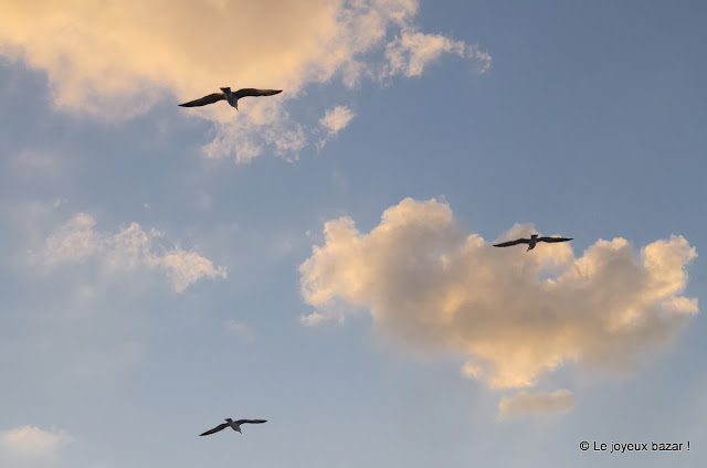 oiseaux et coucher de soleil