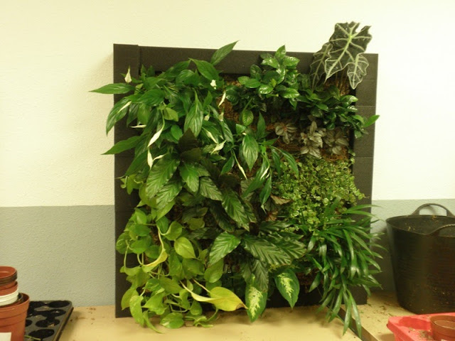 curso jardines verticales Latinoamerica