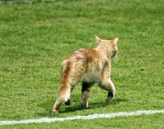 Kiper Diganjar Kartu Kuning Karena Kucing