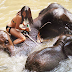 Patara Elephant Farm - Thailand | Be an…