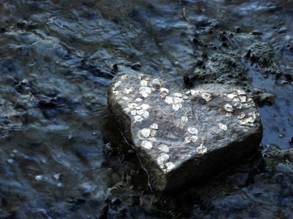 Hindari Lima Hal Penyebab Kerasnya Hati