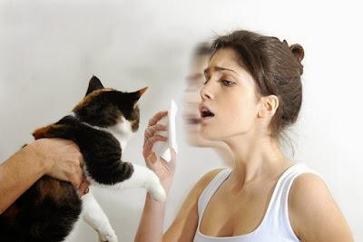 Alergia a gatos, cura da alergia, gatos e alergias.