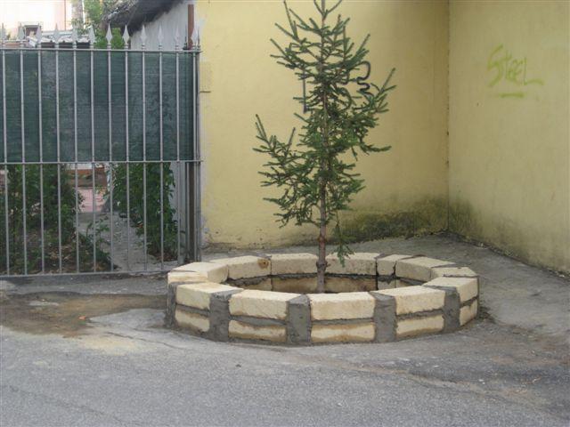 Comitato spontaneo volontario residenti slargo viale for Aiuola con ulivo