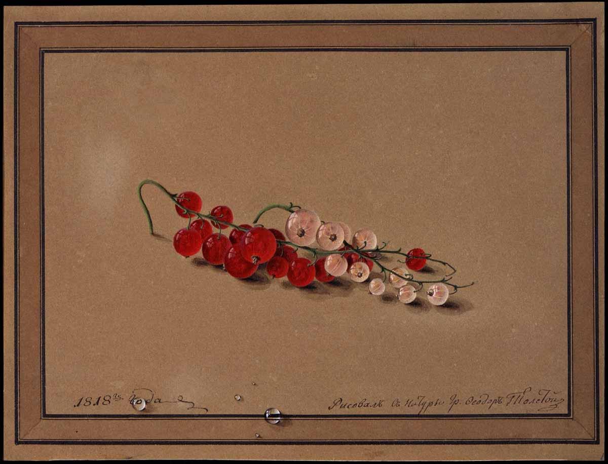 «Ягоды красной и белой смородины» 1818.