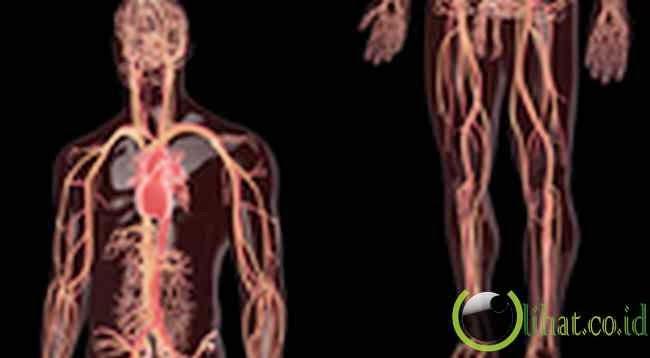 Tubuh manusia memiliki sekitar 60.000 mil pembuluh darah