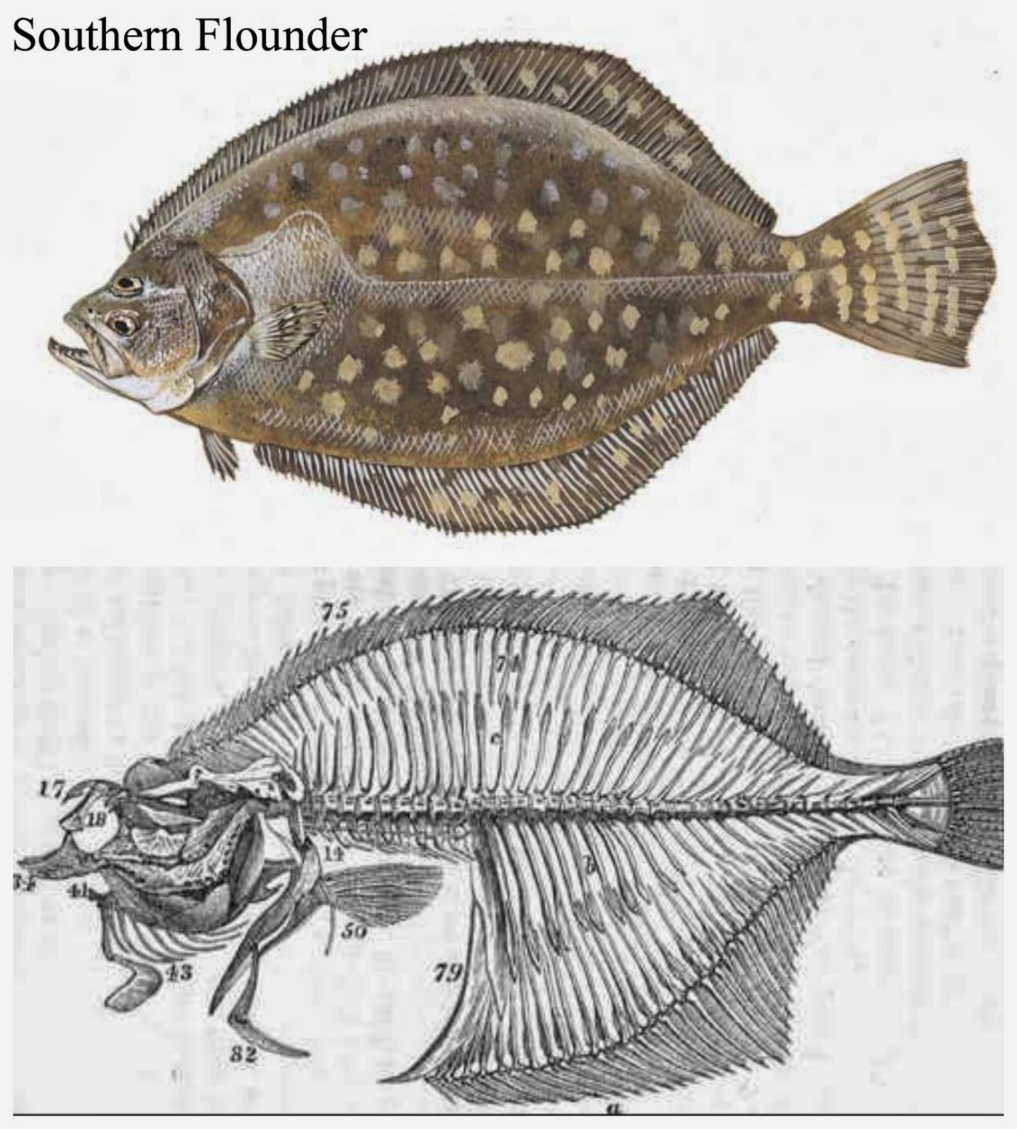 Flounder deutsch