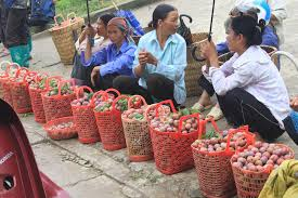 Plum - the typical taste of Bac Ha