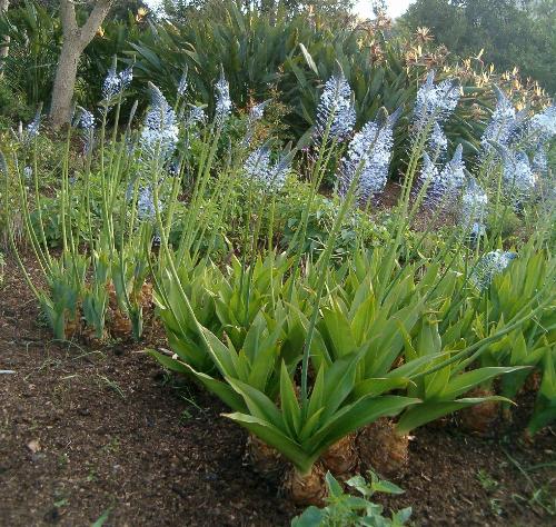Succulent Karoo biome