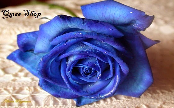 Hoa hồng xanh magic độc đáo