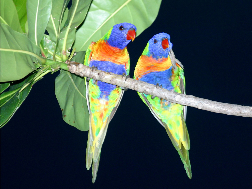 http://1.bp.blogspot.com/-6AltDpKvuOs/UR5JJTQMwkI/AAAAAAAADvE/3w2wNmr90KY/s1600/Beautiful-Birds-Wallpapers-4.jpg