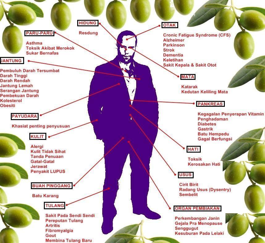 Image Result For Manfaat Madu Dan Minyak Zaitun Untuk Kesehatan