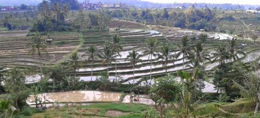 Bali Countryside Tour - Jatiluwih, Village, Penebel, Tabanan, Bali Off The Beaten Track, Tours, Attractions