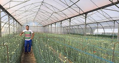 http://www.espanaconequis.com/noticias/agroganaderia/168-cultivando-la-semilla-del-futuro.html#1207-plantacion-de-claveles