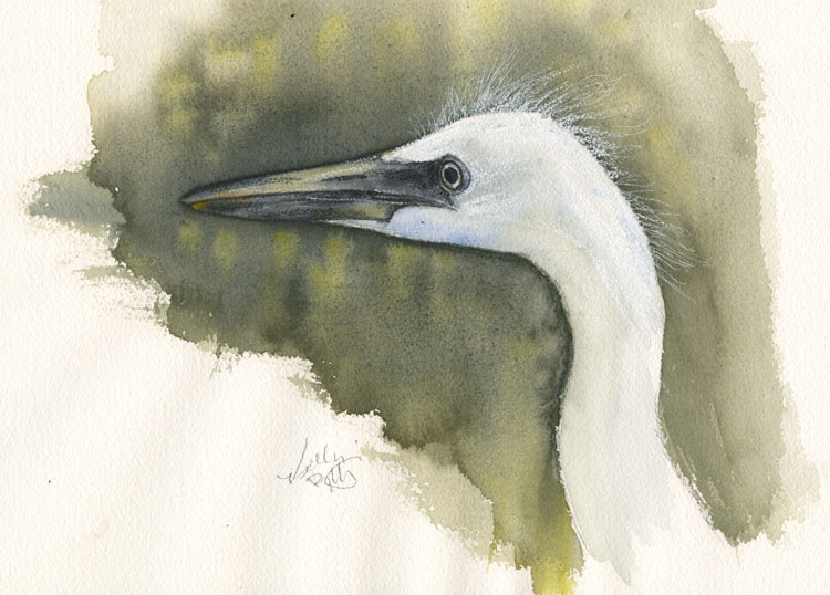 ...a very quick watercolor painting/sketch of an immature Little Blue Heron 