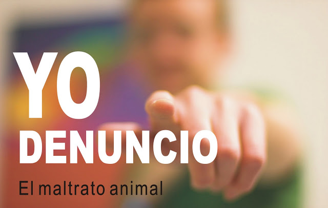 ¿CÓMO DENUNCIAR UN CASO DE MALTRATO ANIMAL?