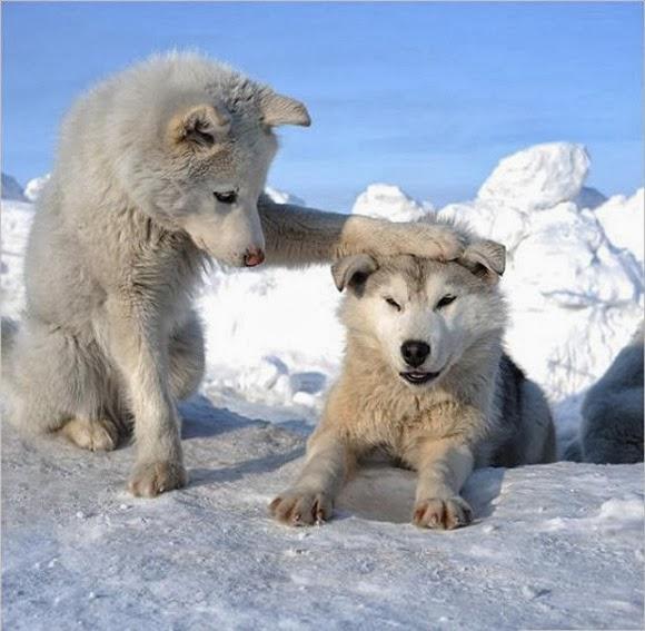 binatang terimut merupakan salah satu dari koleksi gambar hewan