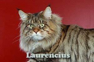 Rupert-Mammoth-Cat-Si-Kucing-Raksasa-Maine-Coon