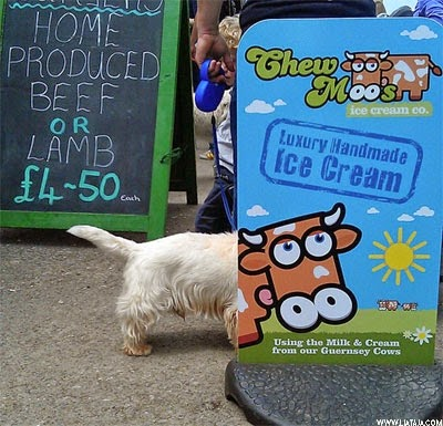 Foto Konyol Anjing | liataja.com
