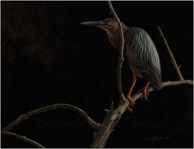 Green Heron bird painting in pastel by avian artist Colette Theriault
