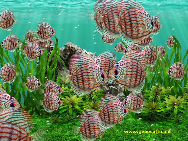Moving fish wallpapers 500 collection hd wallpaper for Moving fish tank