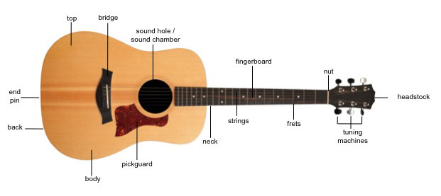 Guitar Anatomy and Design