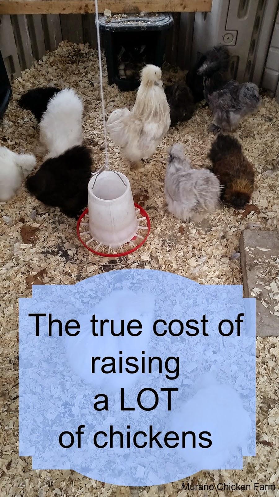 The true cost of raising chickens
