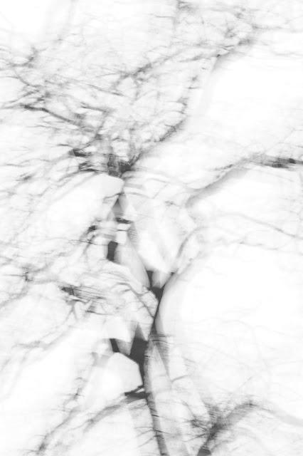 Fotografia abstrakcyjna. Drzewa. fot. Łukasz Cyrus