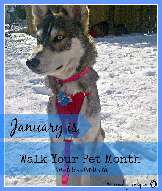 #WalkYourPetMonth