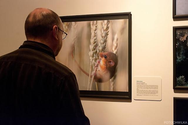 Wystawa Fotografii Dzikiej Przyrody 2013 w Muzeum Górnośląskim w Bytomiu.