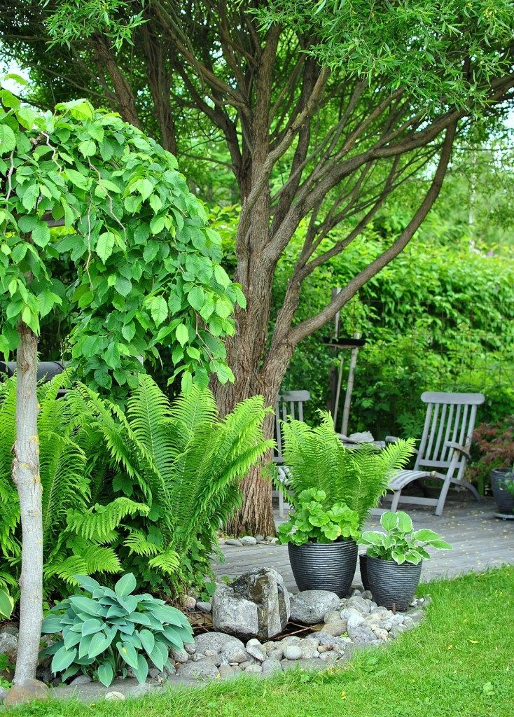 Landscaping With Ferns : Flowers gardens lovely i often forget how wonderful