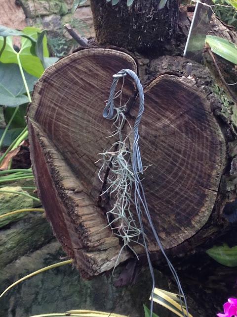 "<Img src = ""07/12/13-2.jpg"" alt = ""tronco madera corazón"">"