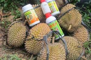 Durian dengan teknologi organik NASA