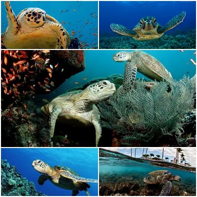 Kaplumbağa Teması