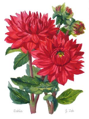 Red Dahlia flowers botanical print