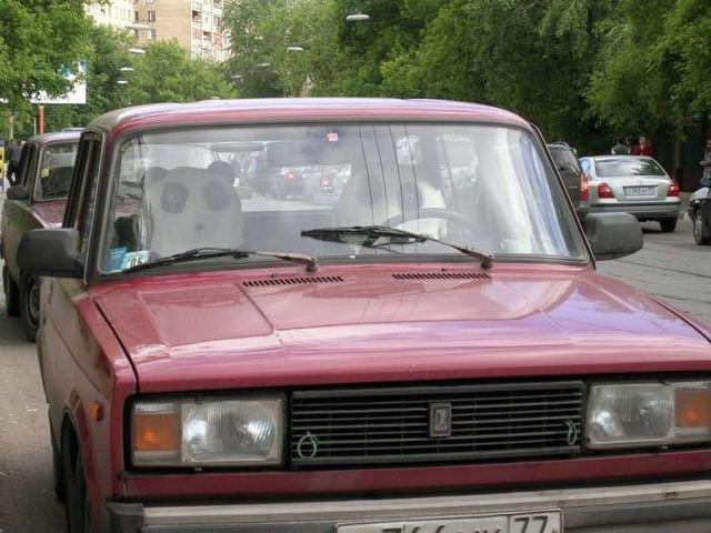 photo Behind the wheel panda!