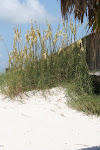 Sea Oats by the Pier - FL