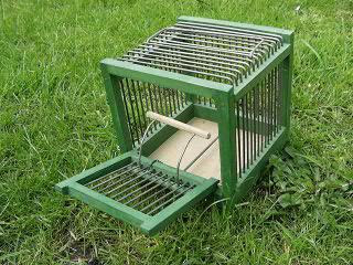 how to make a finch bird trap