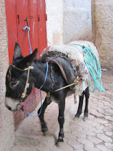 The primary mode of transport in Fes