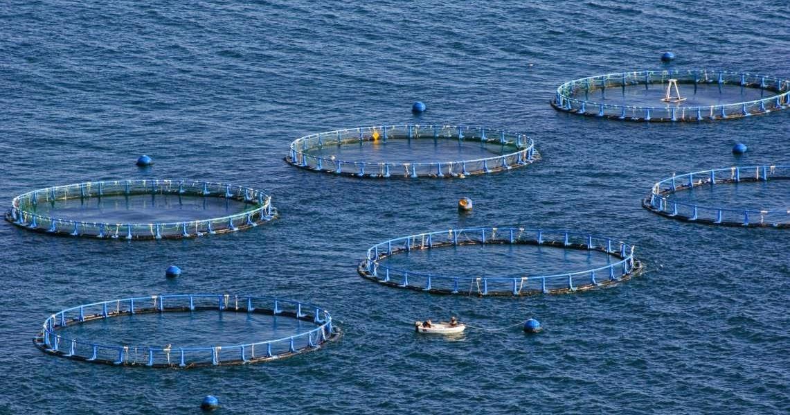 La acuicultura biolog a for Construccion de jaulas flotantes para tilapia