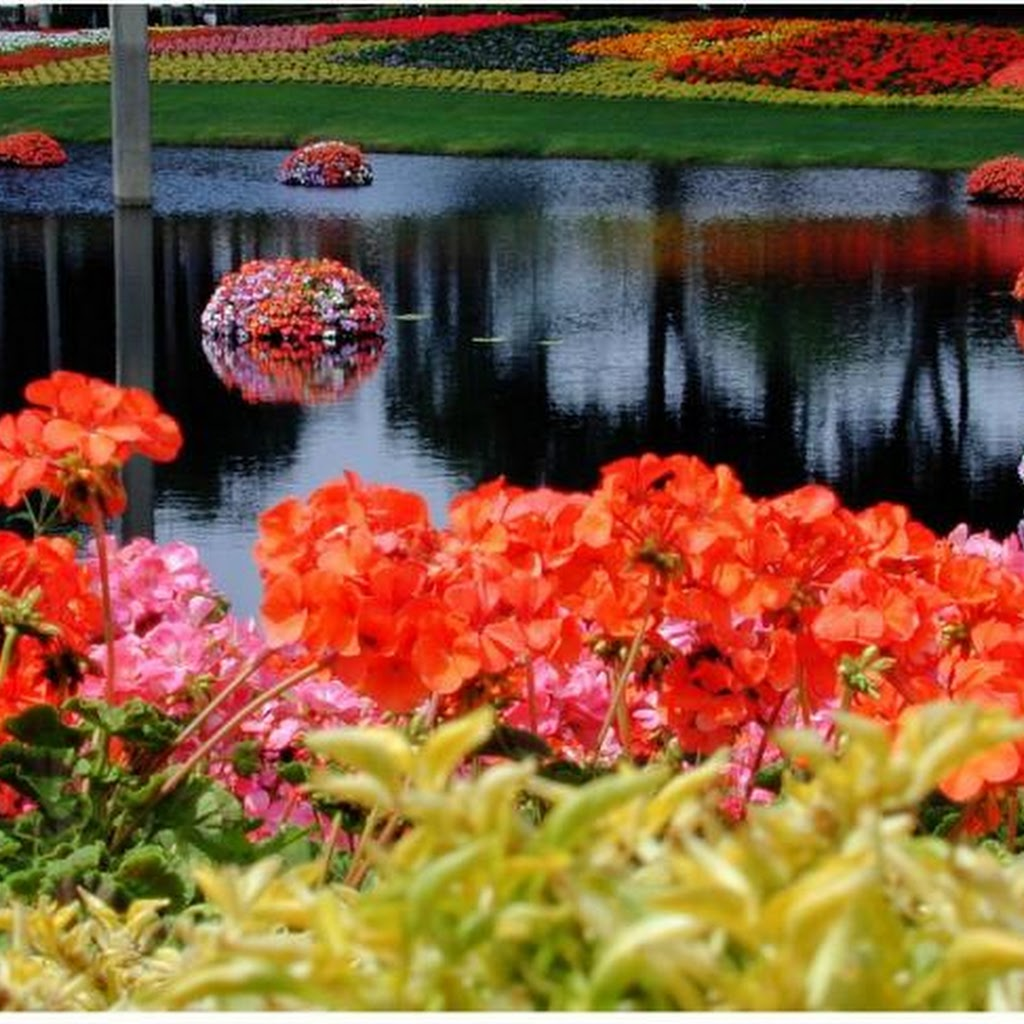 Most Beautiful Images Of Flower Gardens