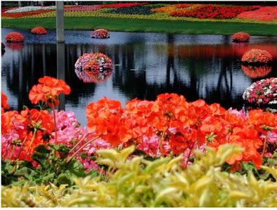 Flowers in water. Most beautiful Scenery