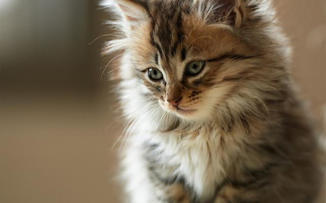 Foto Kucing Lucu Imut dan Menggemaskan 04