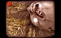 Real Werewolf Footage, Germany 1942