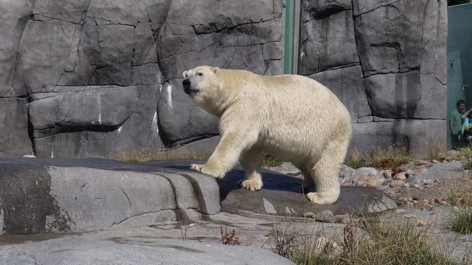 frederiksberg zoo
