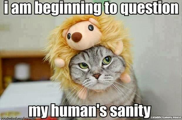 30 Funny animal captions - part 29 (30 pics), funny captioned pictures, animal pictures, funny animals