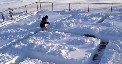cachorros-se-divertem-em-um-labirinto-de-neve