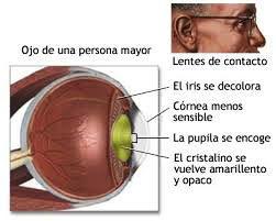 Trastornos-relacionados-con-el-envejecimiento-del-ojo