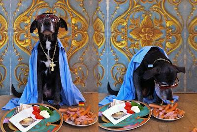 Hund Orakel Deutschland Italen Würstchen