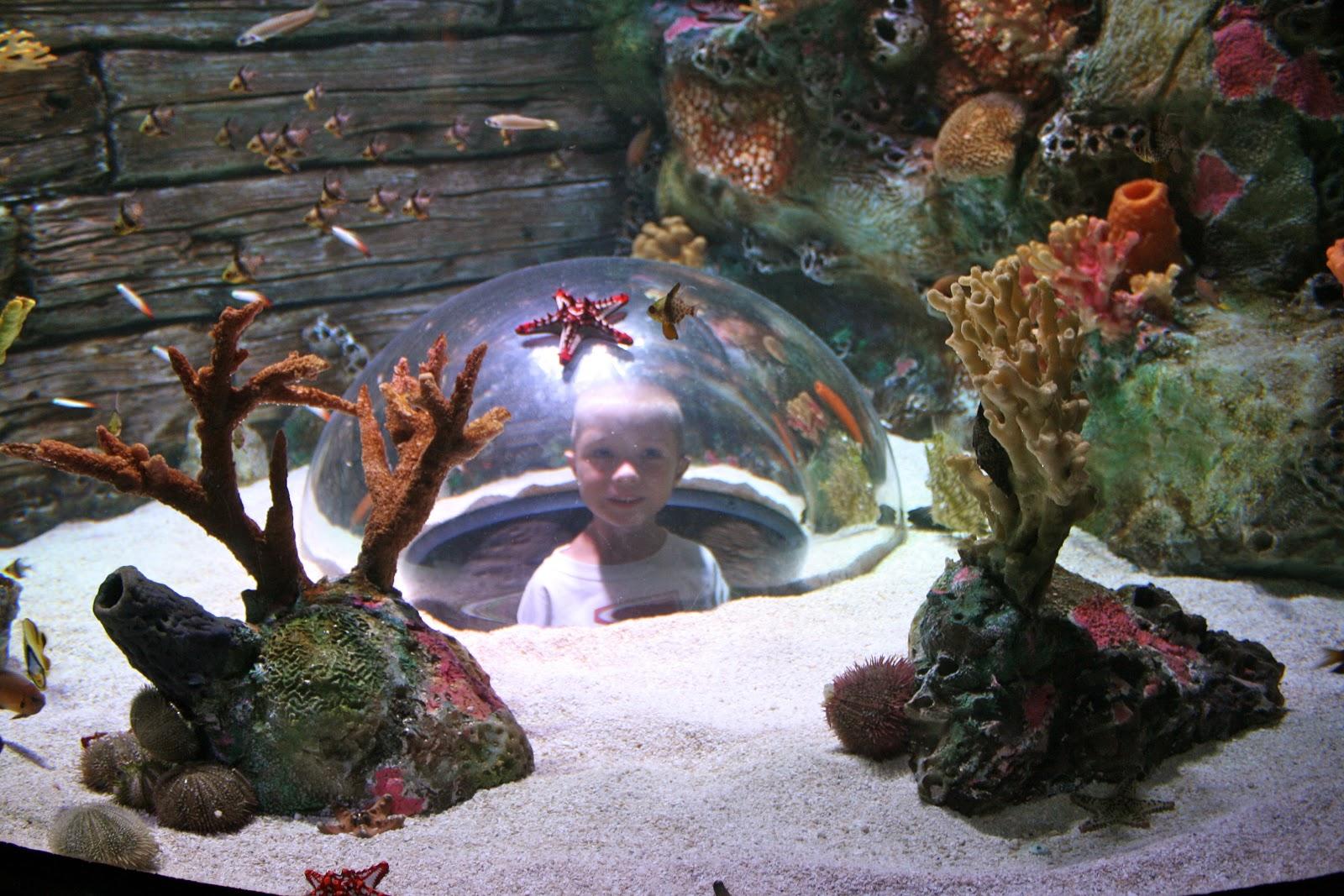 Kansas City Aquarium Crown Center Hours